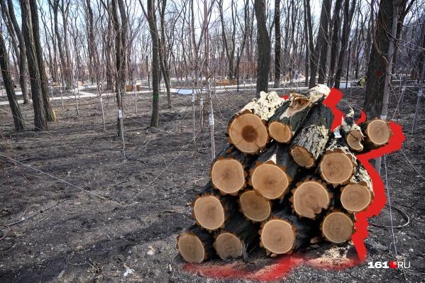 Для благоустройства нескольких ростовских парков потребовалось вырубить деревья