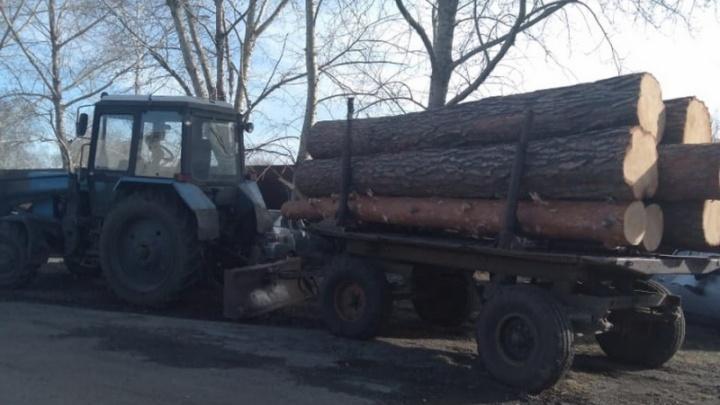 Зауральская семья незаконно спилила сосны на 700 тысяч рублей, чтобы построить дом