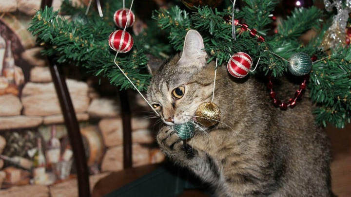 Сезон охоты открыт: 17умилительных фото, как песики и котики атакуют новогодние елки