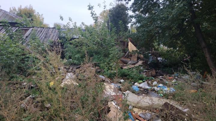 Бараки снесли, мусор остался: уфимец рассказал о нашествии крыс в 15 метрах от жилья детей