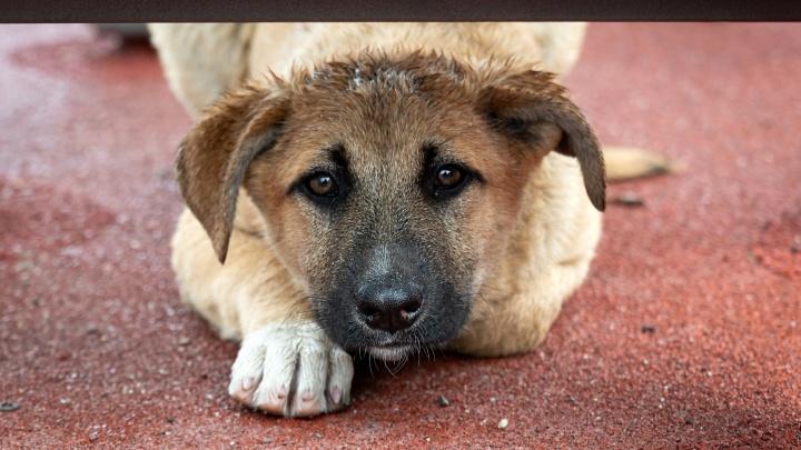В мэрии Волгограда рассказали, куда жаловаться на агрессивных псов, чтобы подействовало