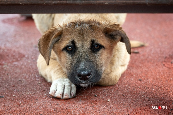 Если на вашу заявку отреагируют в службе отлова, вы, вероятно, спустя некоторое время снова встретитесь с той же собакой на том же месте