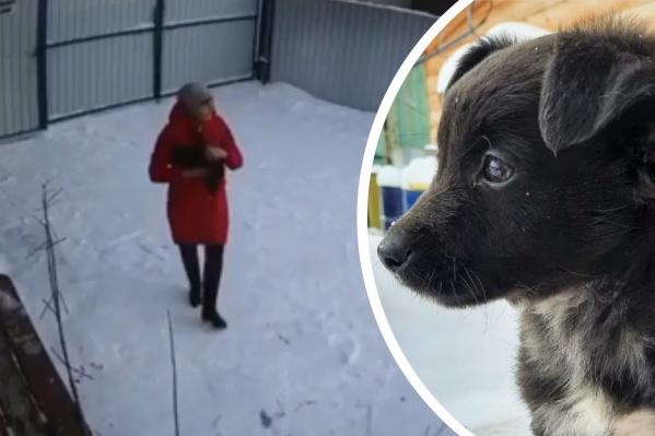 Щенок несколько часов находился на морозе, пока его случайно не заметил сотрудник приюта