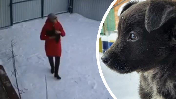 «Я ехала и ревела»: бросившая щенка женщина объяснила свой поступок