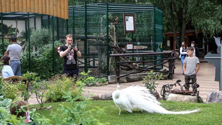 «Мы ведь не жируем»: репортаж из зоопарка «Лимпопо», вернувшегося к работе после 3 месяцев простоя