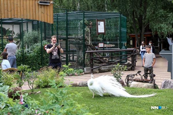 Зоопарки были закрыты для посетителей несколько месяцев