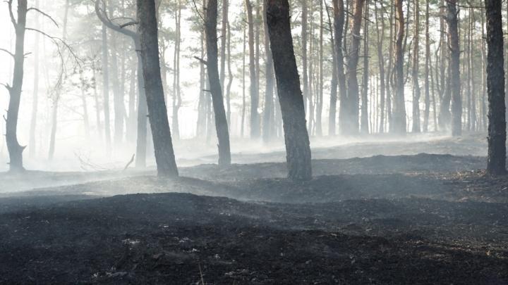 Весь ужас пожаров в Ростовской области: фоторепортаж 161.RU из сгоревших хуторов