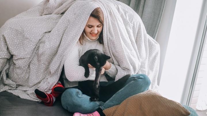 При съемках проекта ни один кот не пострадал: чем занимаются новосибирцы сидя дома и где делают покупки