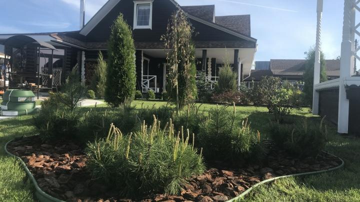 Сад — не место для болота: эксперты поделились советами по уходу за участком