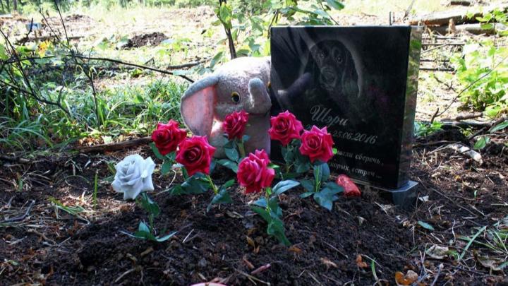 В Самарской области хотят запретить кладбища домашних животных