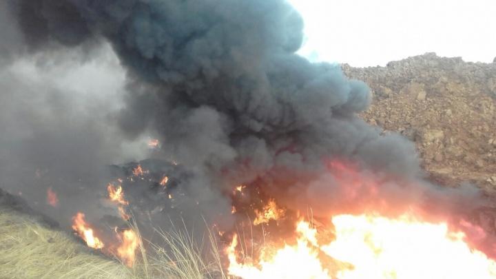 «Огонь горит днем и ночью»: как уничтожали свиней в селах Самарской области
