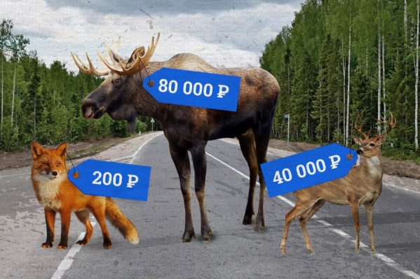 Государство взимает компенсацию за сбитое животное. Правда, часто установить виновника аварии сложно — в случае с мелкими животными