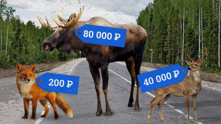 «Голубь за 600»: какие штрафы грозят водителям за сбитых на трассе животных