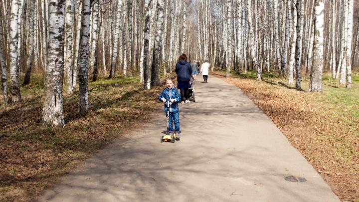 «Закройте Павловскую рощу — от забора ничего не останется»: мнения ярославцев о плате за вход в парки