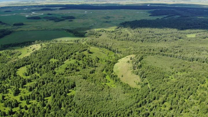 Александр Моор подписал очередное постановление. На этот раз тюменцам запретили посещать леса