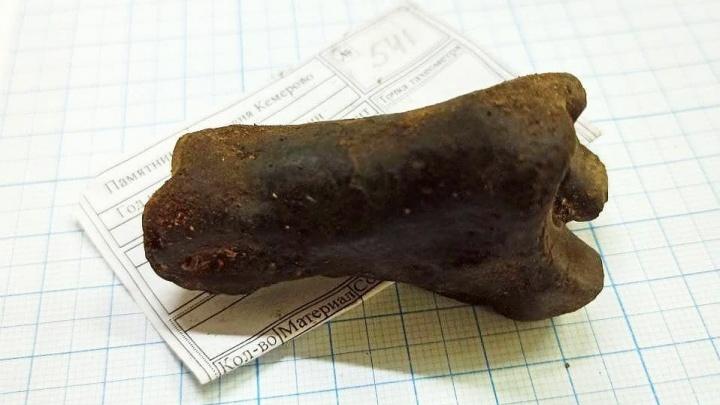 Илья Середюк рассказал о раскопках в Кемерово. Археологи нашли старинную игральную кость