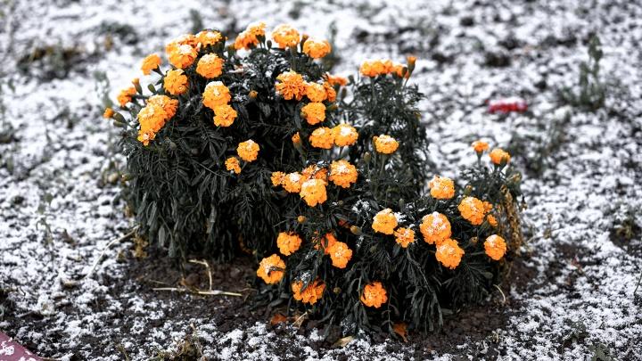 Синоптики спрогнозировали первый снег в Омской области
