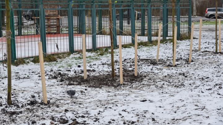 В Архангельске пообещали высадить более 6 тысяч деревьев взамен вырубленных