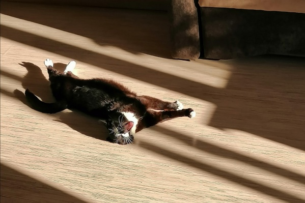 Первомартовские коты Ярославля