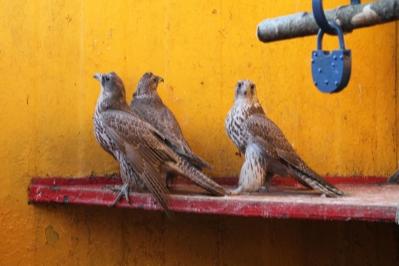 Редких птиц мужчина держал в вольере недалеко от дома