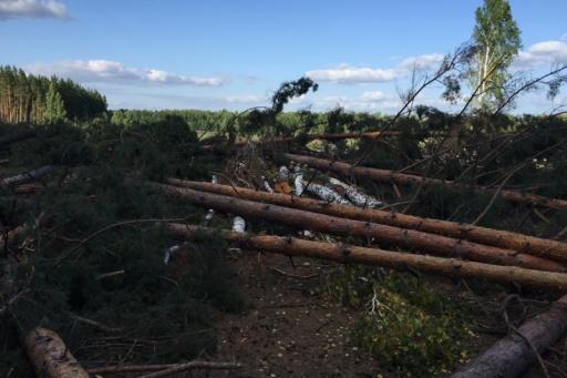 В Кургане осудят банду «чёрных лесорубов» за незаконную рубку леса на 14 миллионов рублей