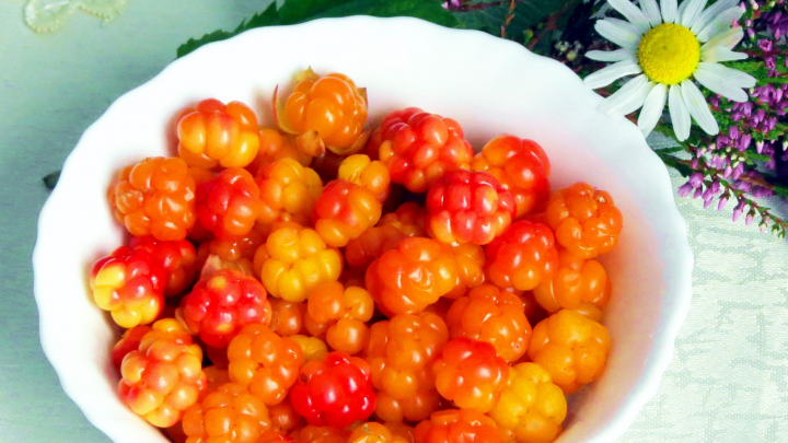 Северный апельсин: где собирать морошку в Архангельской области, как хранить и чем она полезна