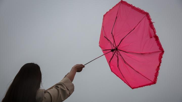 Новосибирцев предупредили о ветре скоростью до 20 м/с
