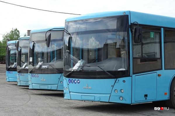 Это автобусы МАЗ, которые будут работать на городских маршрутах