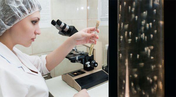 «Это не эпический кошмар»: ученые из Кольцово рассказали, что им известно про новый вирус и как минимизировать риски