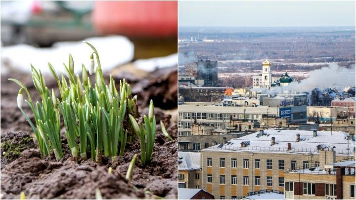 Лучшие фото этой недели: нежные вестники весны, «ДПСник на минималках» и эстетика нижегородских крыш