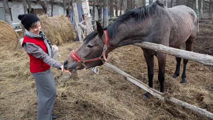 Лошадь — не ИП, просто так не закроешь. Челябинскому конному клубу не на что покупать корм