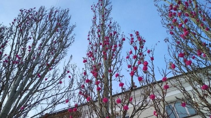 В Омской области к пятнице потеплеет до +6 градусов