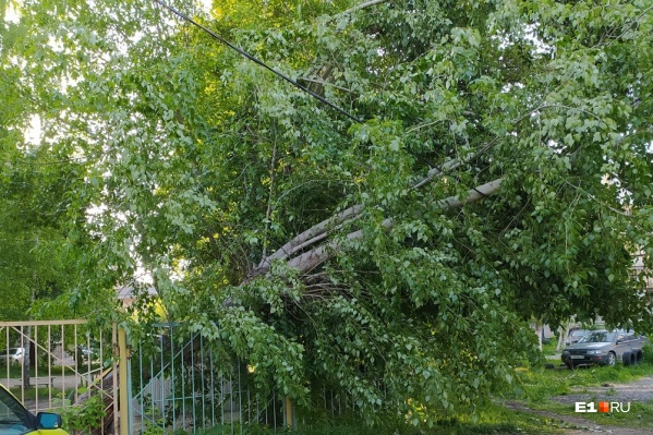На уборку Екатеринбурга от веток и деревьев потребуется еще два дня