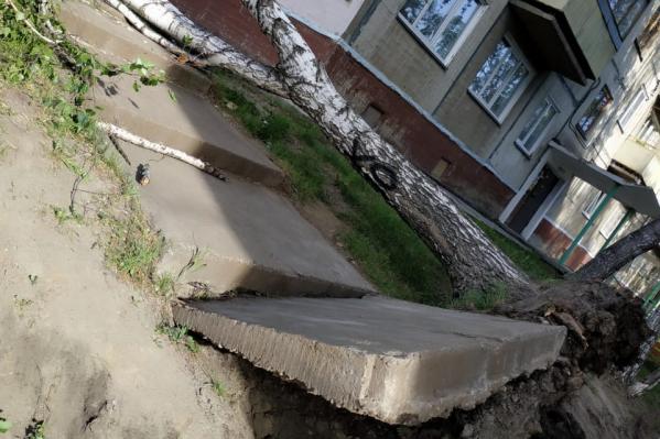 Упавшая берёза на углу Шлюзовой, 25, не только загородила дорогу, но и приподняла бетонную плиту