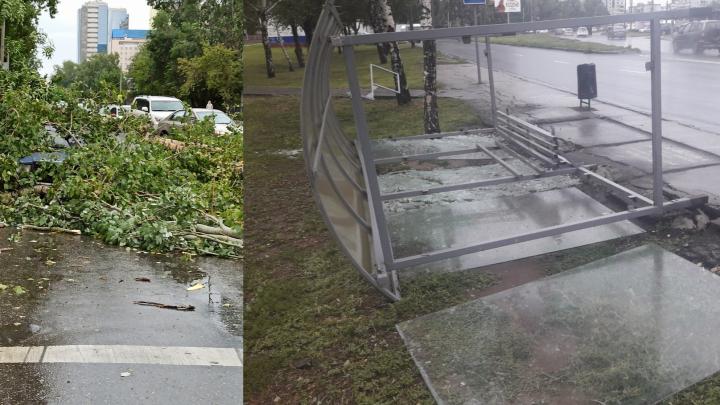 Деревья выдернуло с корнем: жители города показали последствия ураганного ветра в Самаре