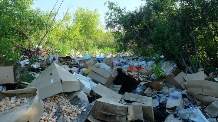 «Из-за запаха мертвечины нам нечем дышать»: Курганцы возмущены незаконной свалкой по улице Томина