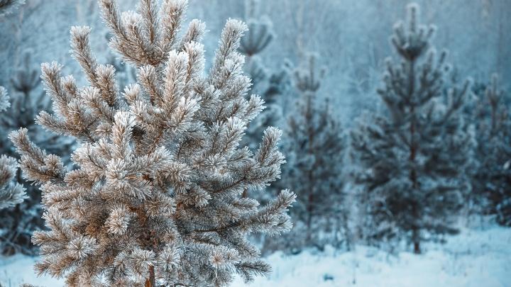 Снег и морозы: рассказываем, чего ждать от погоды в Кузбассе в ближайшую неделю