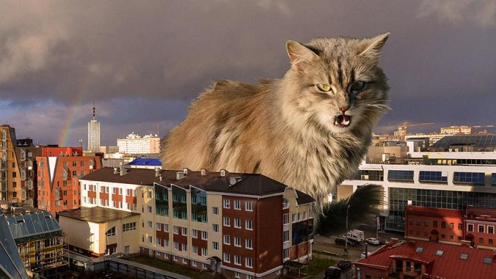 Коты-гиганты бродят среди зданий: интересный фотопроект про уличных животных Архангельска