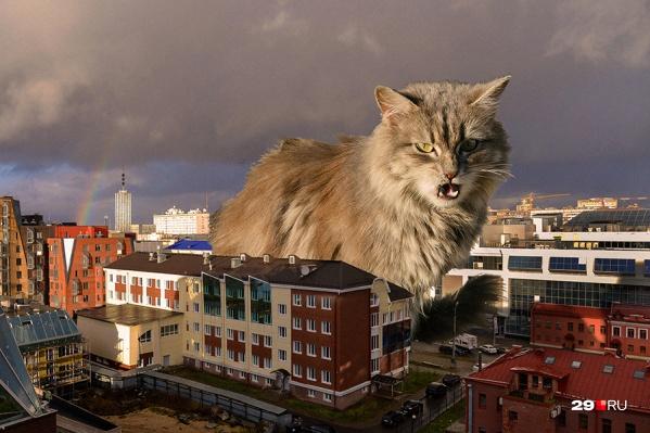 Кот: «А ну-ка иди сюда, живодер!»