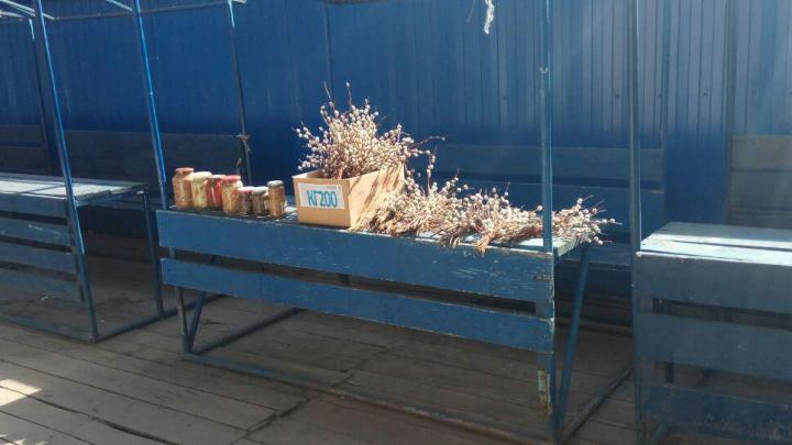 За две недели до Пасхи в Красноярске начали продавать вербу