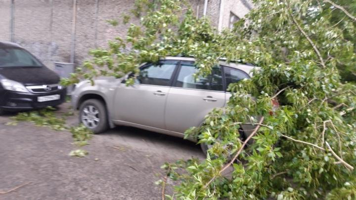 Екатеринбург штормящий: куда бежать, если упавшее дерево разбило вашу машину