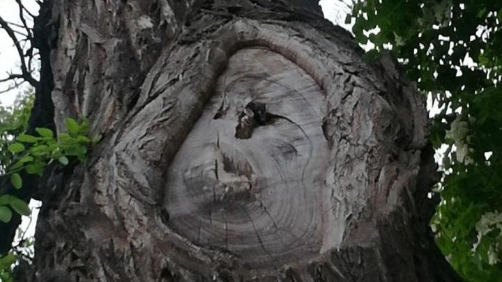 Волгоградцы в разгар коронавируса пытались спасти застрявшего в дереве воробья