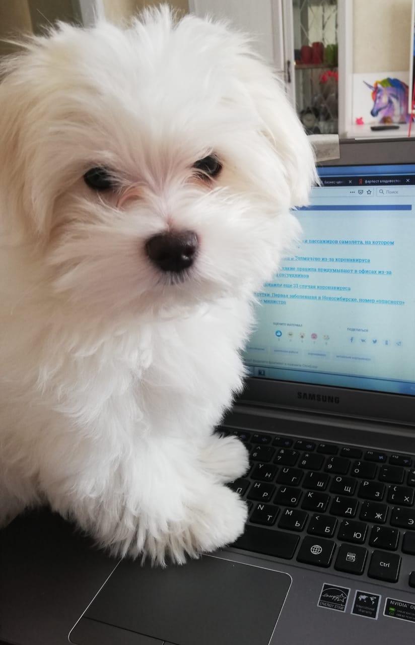 А вот ещё один пёс, который помогает своему хозяину с работой. Его зовут Бруклин<br>