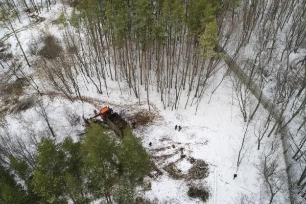 Застройщик даже пытался вырубить лес