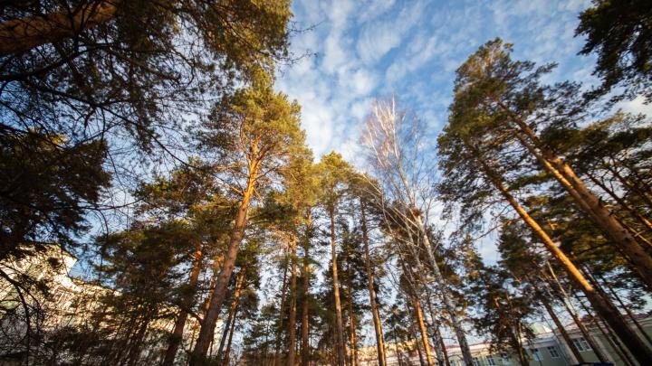 Изменение границ челябинского бора, где под корпус больницы вырубят 400 деревьев, признали законным