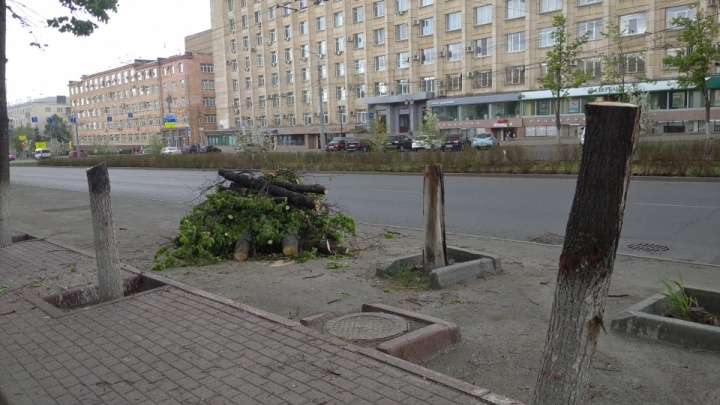 Наталья Котова устроила служебную проверку после вырубки деревьев на проспекте Ленина