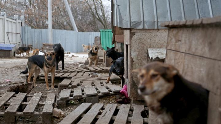 Хабирову прислали план по борьбе с бродячими собаками за10дней до гибели ребенка в Сафарово