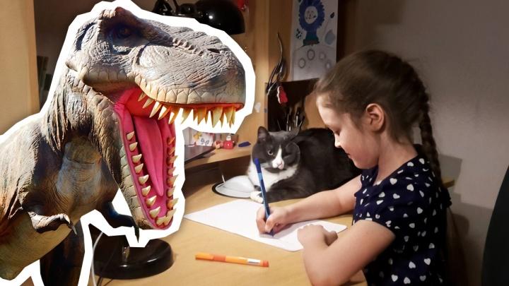 «Сплошная реклама»: на Южном Урале маму школьника возмутили задачи о динопарке в контрольной сына