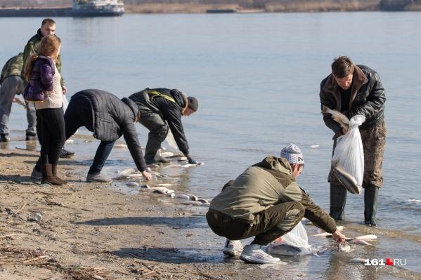 Прокуратура организовала свою проверку обстоятельств гибели рыбы в реке
