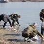 Прокуратура проверит обстоятельства массовой гибели рыбы в Дону